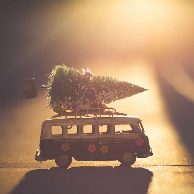 Music under the tree